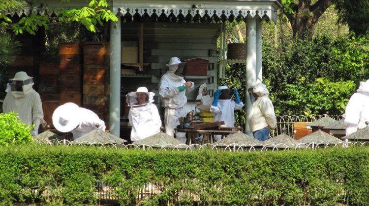 Les ruches, Jardins Luxembourg, Paris, France.